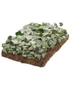Plantmatten Hedera